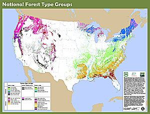 USDA Forest Service FSGeodata Clearinghouse - National Forest Type ...